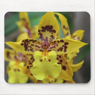 Orquídeas amarillas brillantes alfombrilla de ratón