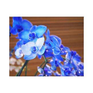 Orquídeas azules lienzo