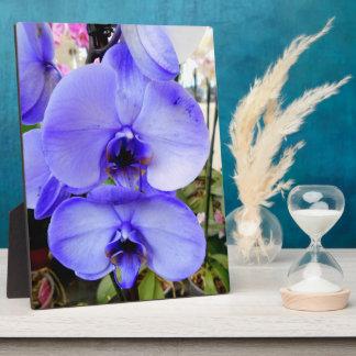 Orquídeas azules placa expositora