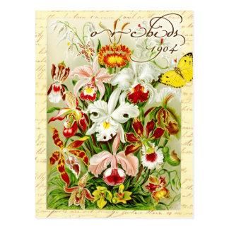 Orquídeas coloridas y mariposa amarilla postal