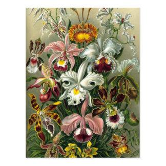 Orquídeas de la selva tropical del vintage flores tarjetas postales