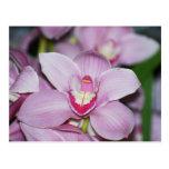 Orquídeas del Honduran Postal
