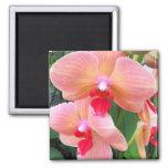 Orquídeas del melocotón - imán
