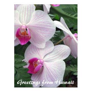 orquídeas hawaianas postal