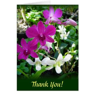 Orquídeas magentas tarjetas