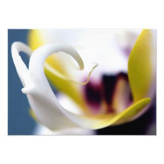 Orquídeas Fotografia