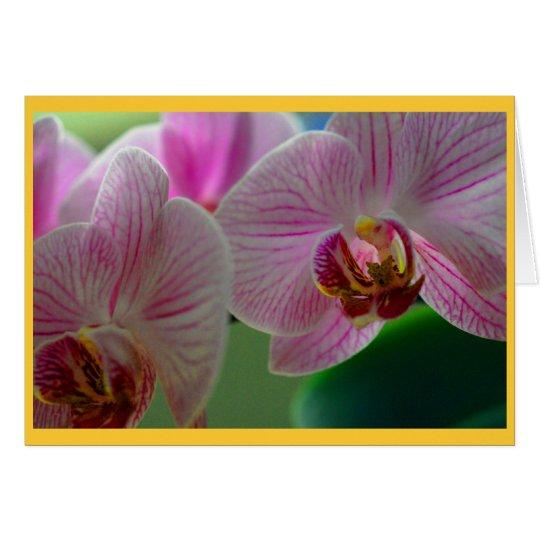 Orquídeas Tarjeta De Felicitación