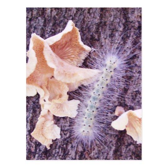 oruga y hongos borrosos postal