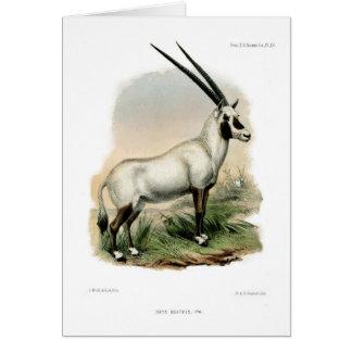 Oryx árabe tarjeta de felicitación