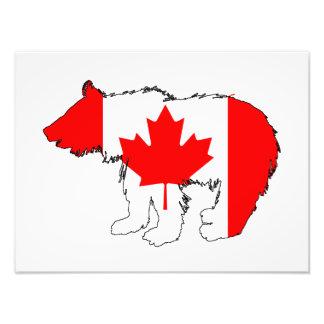 Oso Cub de Canadá Impresiones Fotograficas