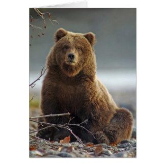 Oso de Brown de Alaska en Kenai NWR, Alaska Tarjeta De Felicitación