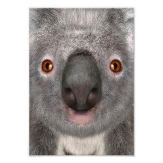 Oso de koala foto