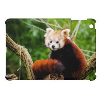 Oso de panda roja lindo