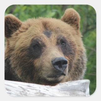 Oso grizzly de Alaska, el Kodiak Pegatina Cuadrada