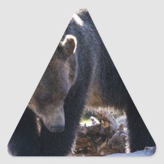 Oso grizzly pegatina triangular