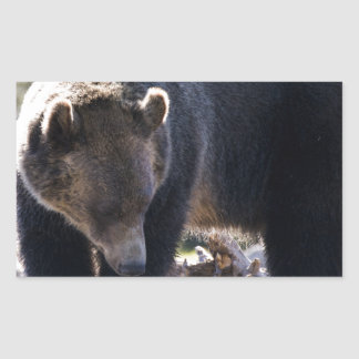 Oso grizzly pegatina rectangular