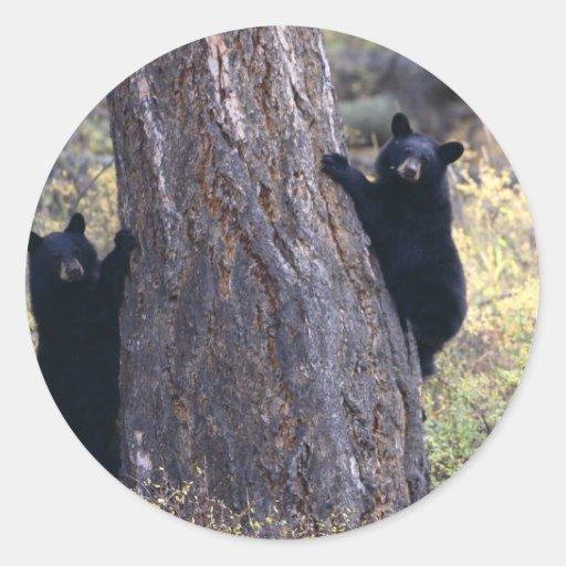 oso etiqueta redonda