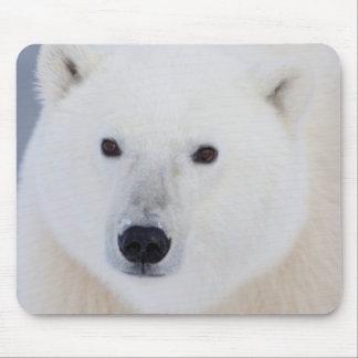Oso polar alfombrilla de ratón
