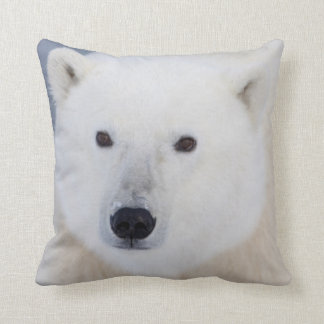 Oso polar cojín