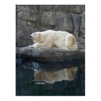 Oso polar con la reflexión postal