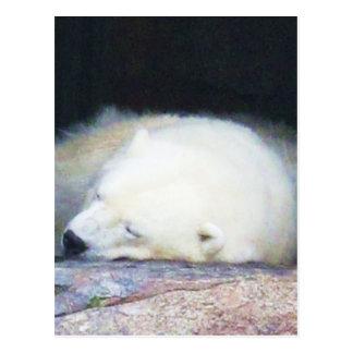 Oso polar el dormir postal
