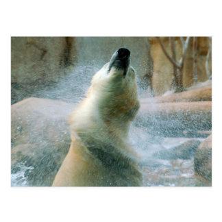 Oso polar postal