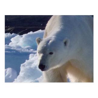 Oso polar salvaje majestuoso postal