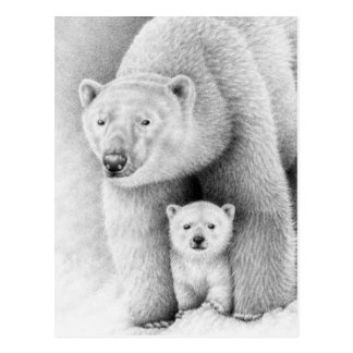 Oso polar y postal de Cub