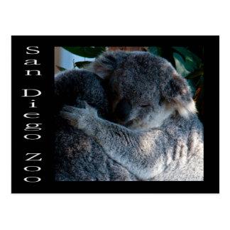Osos de koala postal
