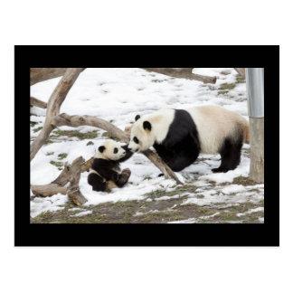 Osos de panda postal