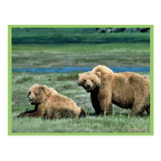 Osos grizzly postal