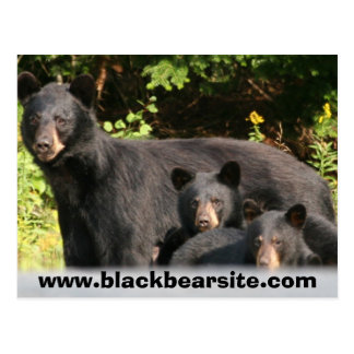 osos negros postal