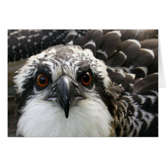 Osprey Tarjeta De Felicitación