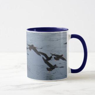 Ostreros en vuelo sobre el agua