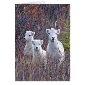 Oveja de las ovejas de Dall con sus corderos en Tarjeta De Felicitación