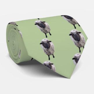 Ovejas curiosas corbata