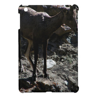 Ovejas de Bighorn de la montaña rocosa, oveja