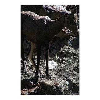 Ovejas de Bighorn de la montaña rocosa, oveja Papelería