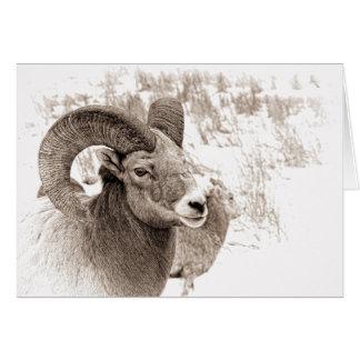 Ovejas de Bighorn Tarjeta De Felicitación