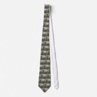 Ovejas de Cheviot Corbata
