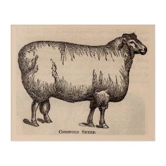 Ovejas del siglo XIX de Cotswold de la impresión Impresión Acrílica