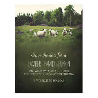 Ovejas en reserva de la reunión de familia del postal