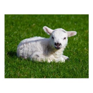 Ovejas lindas del bebé que mienten en hierba postales