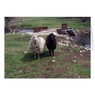 Ovejas negras de las ovejas blancas tarjeta de felicitación