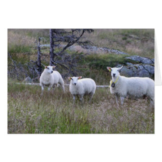 Ovejas noruegas tarjeta