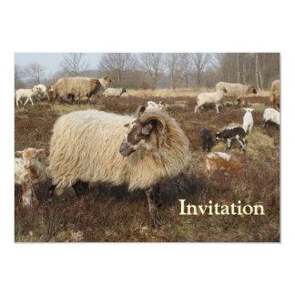 Ovejas - ovejas en campo del brezo anuncio