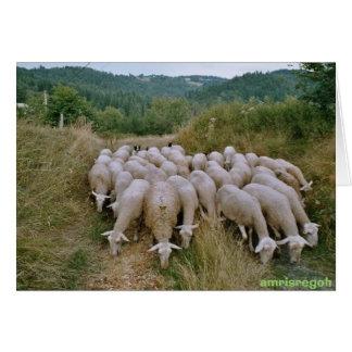 ovejas tarjeta de felicitación