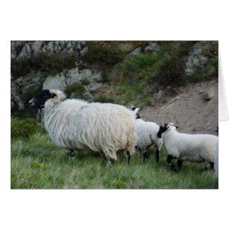 Ovejas y corderos en Northumberland Inglaterra Tarjeta De Felicitación