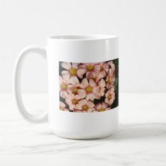 Oxalis, flores del madera-alazán taza básica blanca