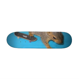 paciencia, squirel patinador tabla de patinar